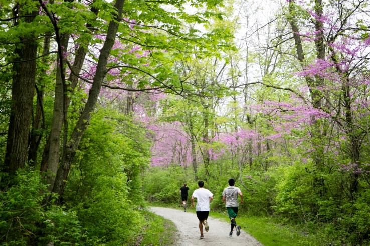 Region 7_McClaughrey Spring Woods